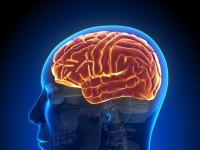 Krążenie mózgowe – czym grożą jego zaburzenia?